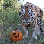 Keeper Tessa's Blog 10/16/19