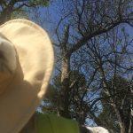 Dr. Wilde's Blog 4/15/19