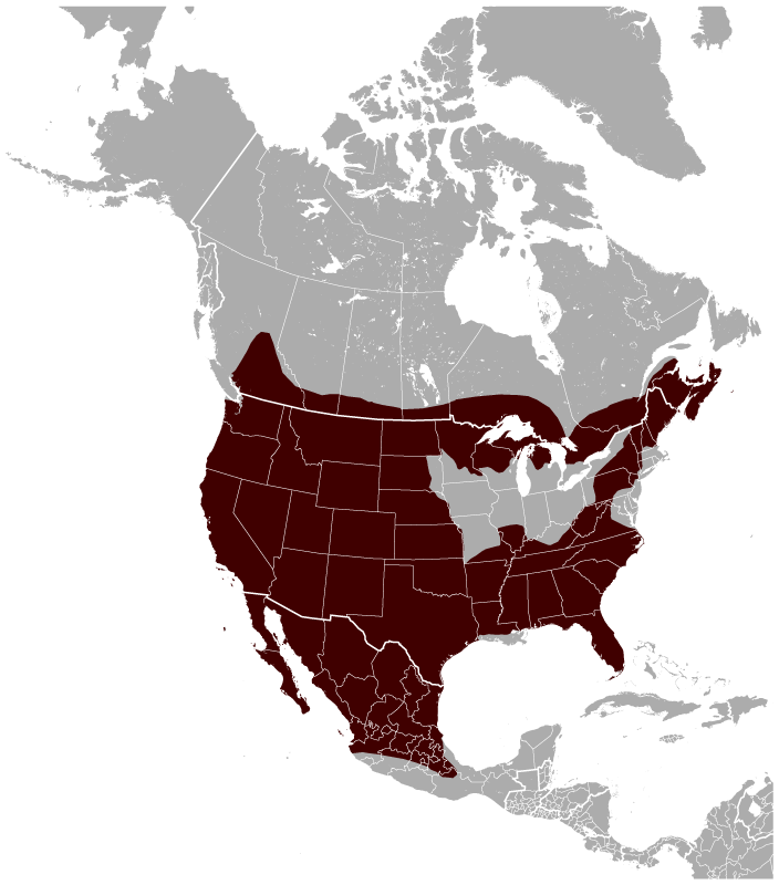 Black Dog Locations In Georgia