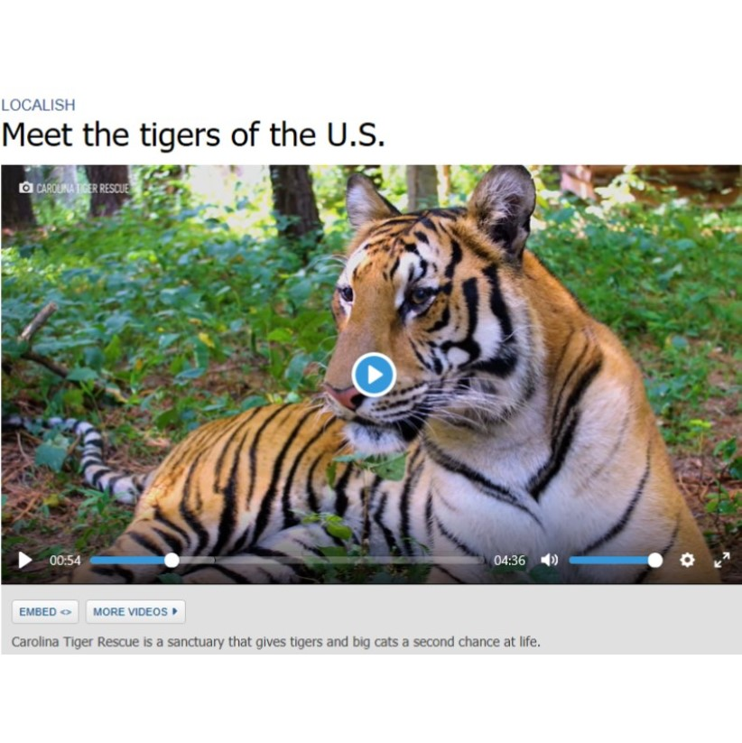 Meet the Tigers of the U.S.