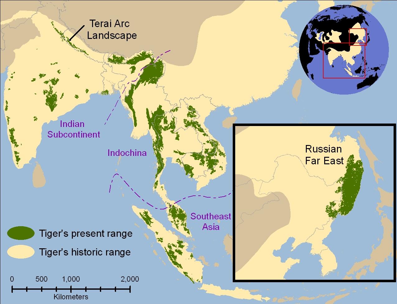 Easy Tiger World Map. Tiger  Carolina Rescue