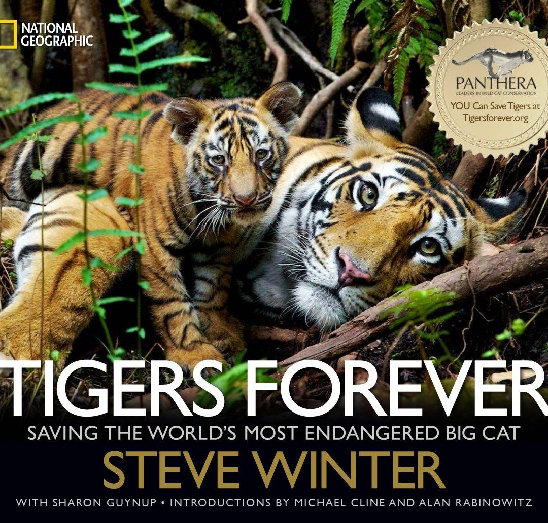 Tigers Forever by: Steve Winter