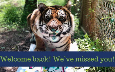 Catch up with the cats – Carolina Tiger Rescue is Reopening!