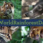 #WorldRainforestDay
