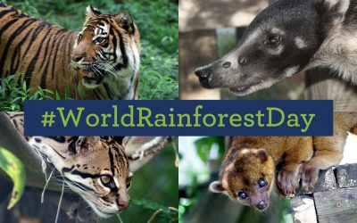 Celebrate World Rainforest Day