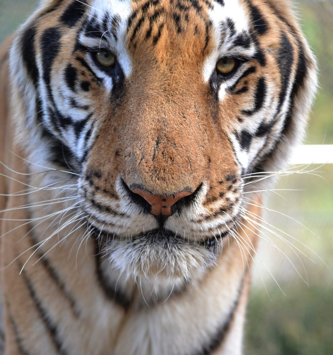 Ten Things You Need to Know about Captive Big Cats